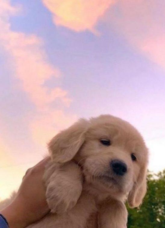 Animirani filmovi o psima koje ćete obožavati