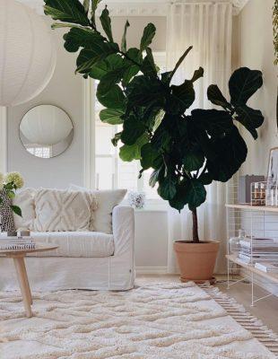 Kako vam biljke mogu ulepšati i ukrasiti životni prostor