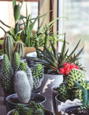 7 biljaka za jednostavno gajenje u svakom domu
